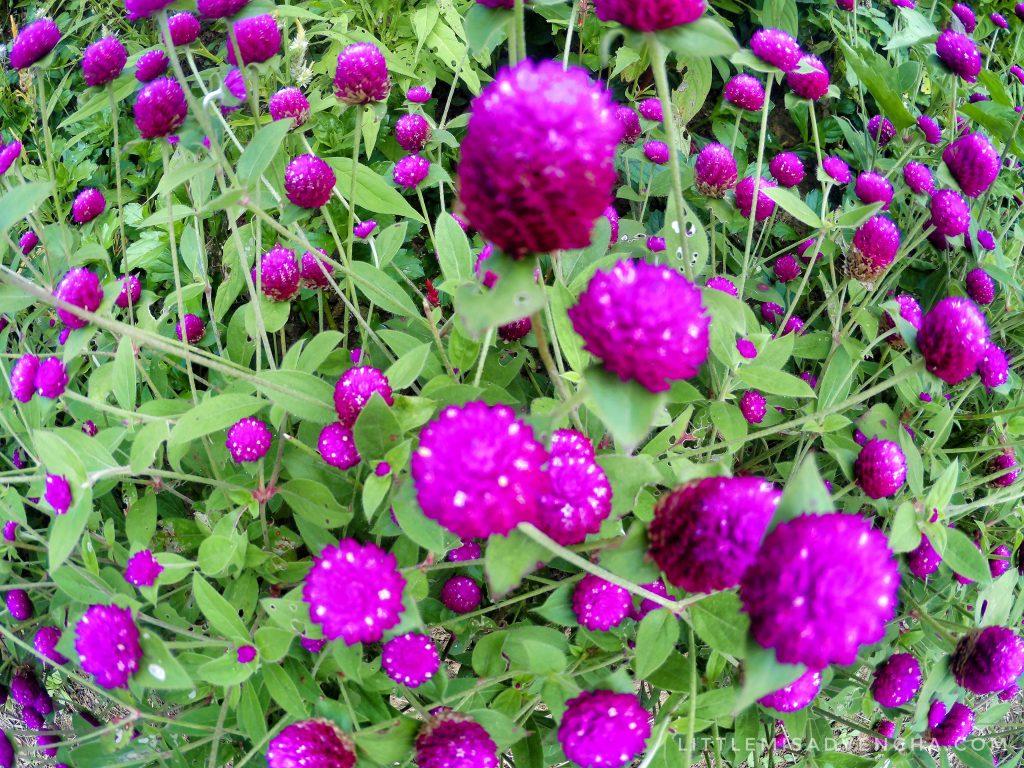 Tieza Botanical Garden by Malubog Lake