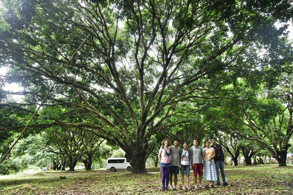Mango Research Center in Guimaras Island