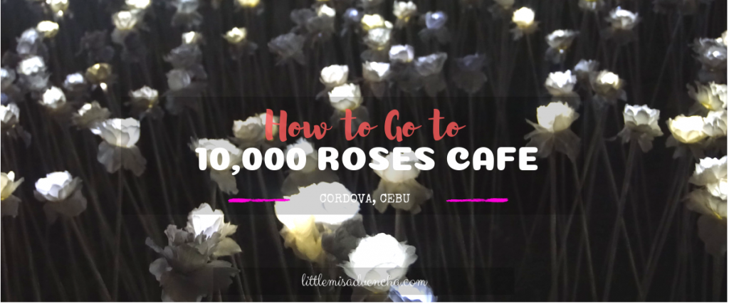 How to Go to 10,000 Roses Cafe in Cordova
